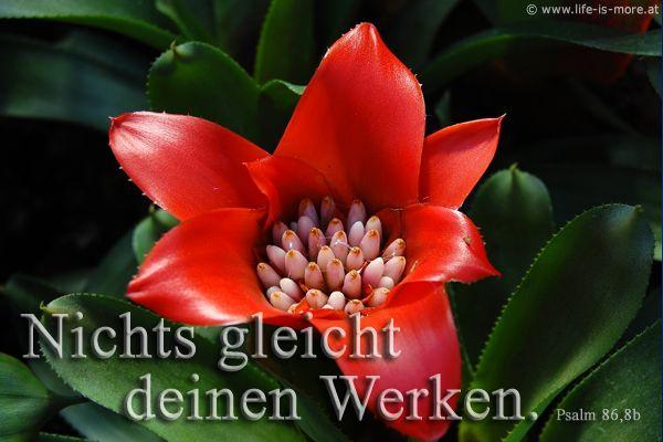 Nichts gleicht deinen Werken! Psalm 86,8b - Bildquelle: pixelio.de