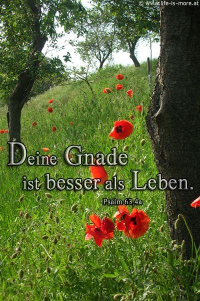 Deine Gnade ist besser als Leben. Psalm 63,4a - Bildquelle: pixelio.de