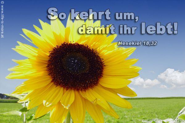 So kehrt um, damit ihr lebt! Hesekiel 18,32 - Bildquelle: pixelio.de