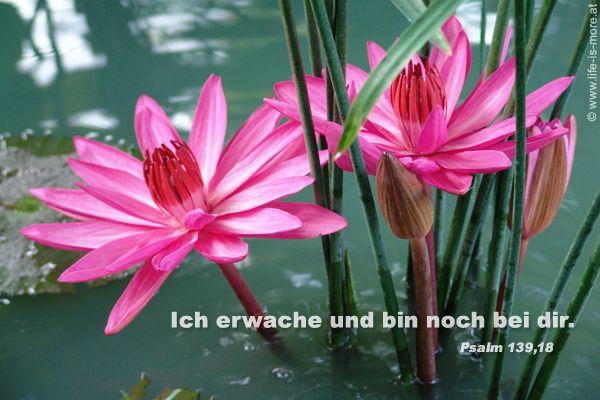 E-Card - Copyright: life-is-more.at - Fotoquelle: pixelio.de