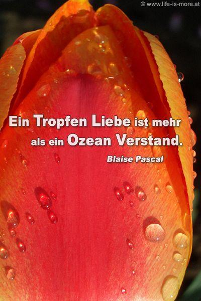 Ein Tropfen Liebe ist mehr als ein Ozean Verstand. Blaise Pascal - Bildquelle: pixelio.de